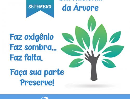 Hoje é dia Nacional da Árvore! Data criada para conscientizar a população